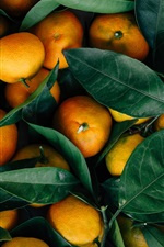 Citrino de frutas de outono