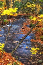 Preview iPhone wallpaper Autumn, trees, creek, yellow leaves, stones, Ontario, Canada