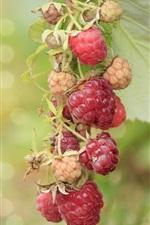 Preview iPhone wallpaper Berries, raspberry, branch, bokeh