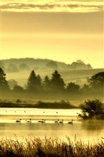 Preview iPhone wallpaper Birds, grass, lake, trees, hills, fog