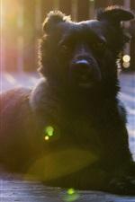 Preview iPhone wallpaper Black dog rest, look, sunshine, glare
