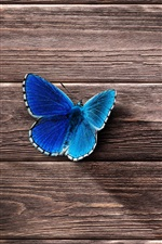 Preview iPhone wallpaper Blue butterfly, wood board background