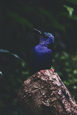 Preview iPhone wallpaper Blue feather kingfisher, stump