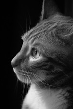 Preview iPhone wallpaper Cat side view, black white picture