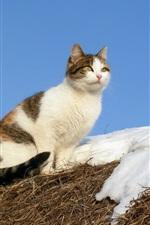 Cat, snow, grass