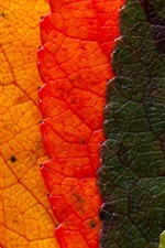 Preview iPhone wallpaper Colorful leaves, rainbow colors