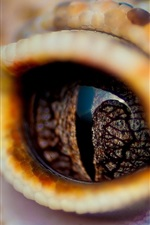 Fotografia de macro de olhos de crocodilo