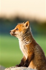 Preview iPhone wallpaper Cute fox look at the distance
