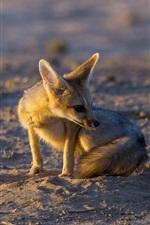 Preview iPhone wallpaper Cute fox, sands