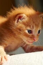 Preview iPhone wallpaper Cute orange kitten first steps