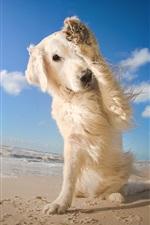 Preview iPhone wallpaper Dog, legs, beach, sea, blue sky