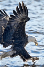 Preview iPhone wallpaper Eagle flight, wings, lake, water