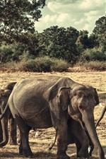 Preview iPhone wallpaper Elephants family, Sri Lanka, Minneriya National Park
