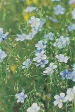 Preview iPhone wallpaper Flower field, little blue flowers