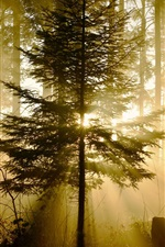Preview iPhone wallpaper Forest, trees, sun rays, nature