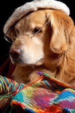 Preview iPhone wallpaper Funny dog, retriever, glasses, hat, knitting