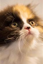 Furry kitty procurar