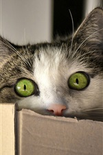 Preview iPhone wallpaper Green eyes cat look, box