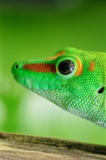Preview iPhone wallpaper Green lizard, reptile close-up
