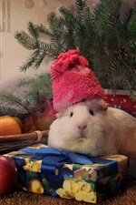 Preview iPhone wallpaper Guinea pigs, tangerines, apples, spruce twigs, gift