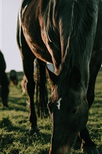 Preview iPhone wallpaper Horses eat grass, feeding