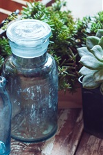 Preview iPhone wallpaper Houseplant, succulent plants, bottles