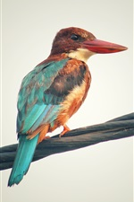 Preview iPhone wallpaper Kingfisher, wire