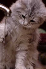 Preview iPhone wallpaper Kitty play water, funny