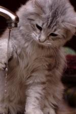 iPhone fondos de pantalla Kitty jugar agua, divertido