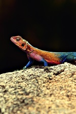 Preview iPhone wallpaper Lizard, colorful colors