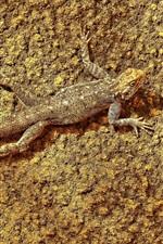 Preview iPhone wallpaper Lizard hidden on the ground