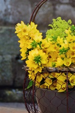 Preview iPhone wallpaper Lysimachia yellow flowers, basket, decoration