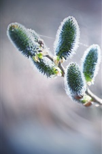 Preview iPhone wallpaper Nature, sprout, twigs, spring, bokeh