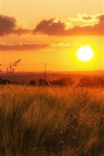 Preview iPhone wallpaper Orange sky, grass, sunset
