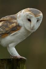 Preview iPhone wallpaper Owl, stump, bird