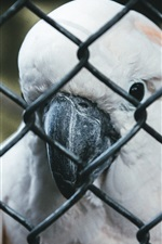 Preview iPhone wallpaper Parrot, beak, fence