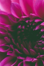 Preview iPhone wallpaper Pink petals flower macro