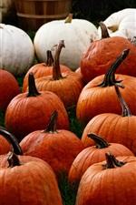 Preview iPhone wallpaper Pumpkin, vegetable, harvest