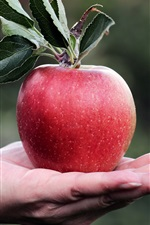 Preview iPhone wallpaper Red apple in hand, leaves