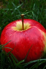 Preview iPhone wallpaper Red apple in the grass