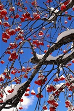Preview iPhone wallpaper Red berries tree, winter, snow