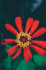 Preview iPhone wallpaper Red petals flower macro photography, bokeh