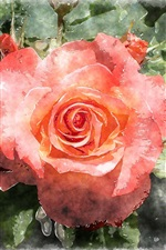 Preview iPhone wallpaper Red rose, watercolor painting