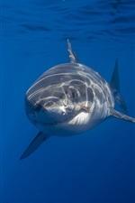Preview iPhone wallpaper Sea animal, shark, underwater, blue