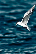 Preview iPhone wallpaper Seagull flight, wings, sea, water