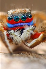 Preview iPhone wallpaper Spider macro photography, eyes, insect