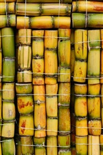 Sugar cane, bamboo background