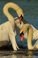 Preview iPhone wallpaper Swans, couple, lake, water