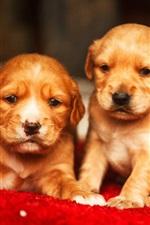 Preview iPhone wallpaper Three cute puppies, Golden Retriever