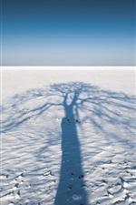 iPhone fondos de pantalla Sombra de árbol, nieve, invierno